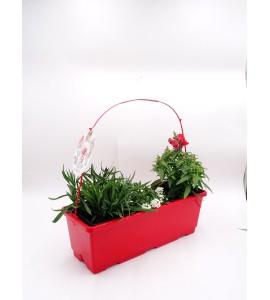 TriOh! Floralicious I. L. maritima + A. majus + D. chinenis - 02045008 (3)