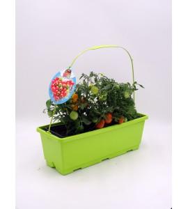 TriOh! Tomates Solanum lycopersicum - 02045003 (0)