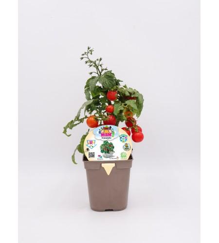 Miam! Tomate Cherry Primabelle 1l