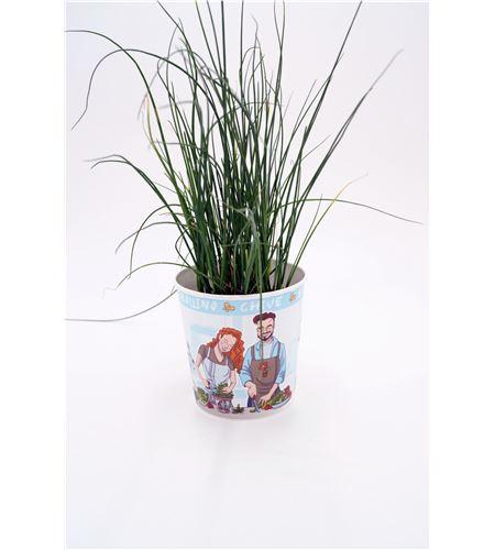 Cebollino Gourmet Allium schoenoprasum - 02029002 (1)