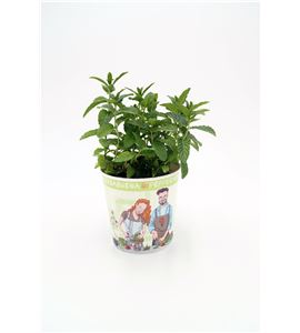 Menta Gourmet ECO Mentha spicata - 02029003 (1)