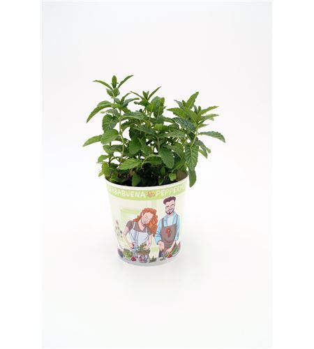 Menta Gourmet Mentha spicata - 02029003 (1)