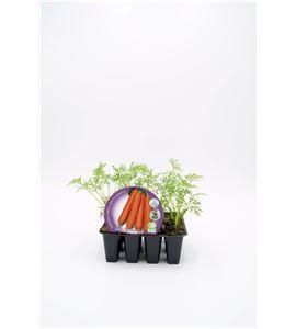 Justo de tamaño ´Pack Zanahoria 12 Ud. ECO Daucus carota - 02031092 (1)