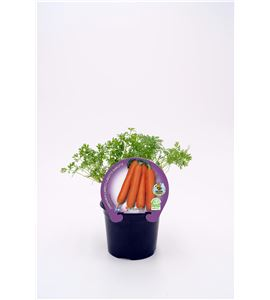Zanahoria M-10,5 ECO Justo de tamaño - 02025063 (1)