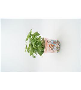 Albahaca Gourmet Ocimum basilicum - 02029001 (1)