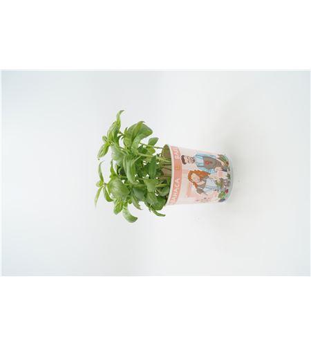 Albahaca Gourmet ECO Ocimum basilicum - 02029001 (1)