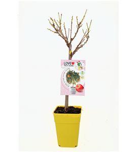 Nectarino Enano Garden Beauty 5l - 03055008 (1)