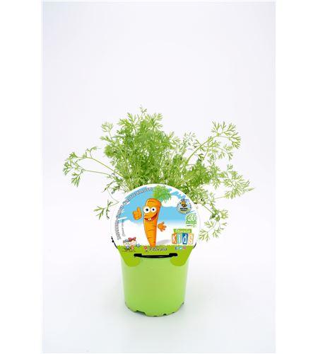 Zanahoria Colección KIDS M-10,5 ECO Daucus carota - 02034003 (1)