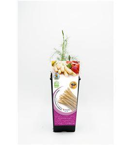 Espárrago Blanco 2l ECO Asparagus officinalis - 02040006 (1)