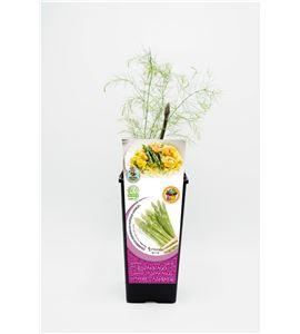 Espárrago Verde 2l ECO Asparagus officinalis - 02040007 (1)