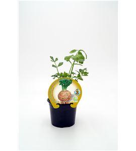 Apio-Rábano M-10,5 Apium graveolens var. rapaceum - 02025153 (1)