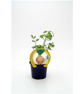Apio-Rábano M-10,5 ECO Apium graveolens var. rapaceum - 02025153 (1)