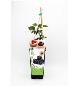 Mora 2l Rubus fruticosus - 02040004 (1)