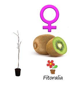 Kiwi Hembra - Actinidia deliciosa - 03050022 (0)