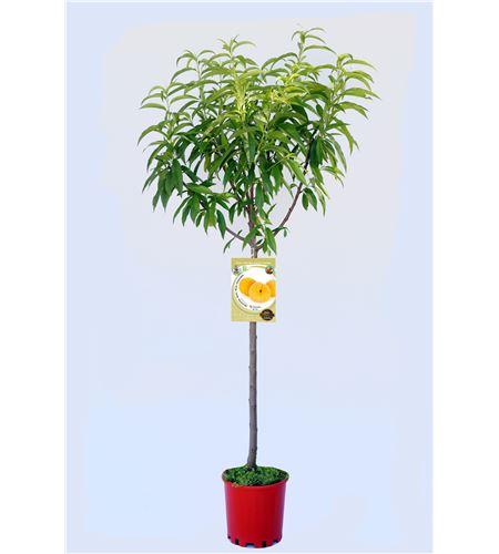 Melocotón Sudanell M-25 - Prunus persica - 03054016 (1)
