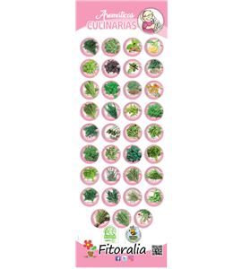 Cartel Colección Aromáticas. Gratis con implantación 10 bandejas. - 23550026 (1)