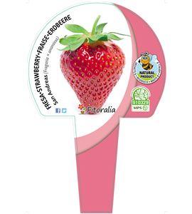 Cartel Piruleta Fresas - 23550012 (1)