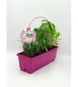 TrioOh! Fresh. M. spicata + P. crispum + O. basilicum/A. schoenoprasum - 02045006 (0)