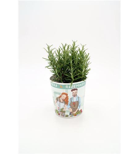 Tomillo Gourmet Thymus vulgaris - 02029006 (1)