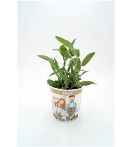 Salvia Gourmet Salvia officinalis - 02029007 (1)