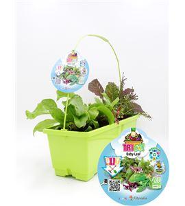 TriOh! Baby Leaf - 02045015 (0)