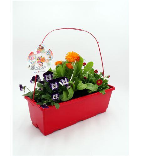 TriOh! Floralicious III. V. cornuta + C. oficinalis + B. perennis - 02045010 (0)