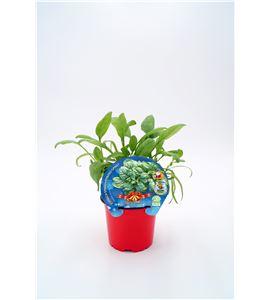 Espinaca Navidad M-10,5 Spinacia oleracea - 02035005 (1)