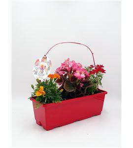 TriOh! Floralicious II. B. semperflorens + V. hybrida + T. patula - 02045009 (0)