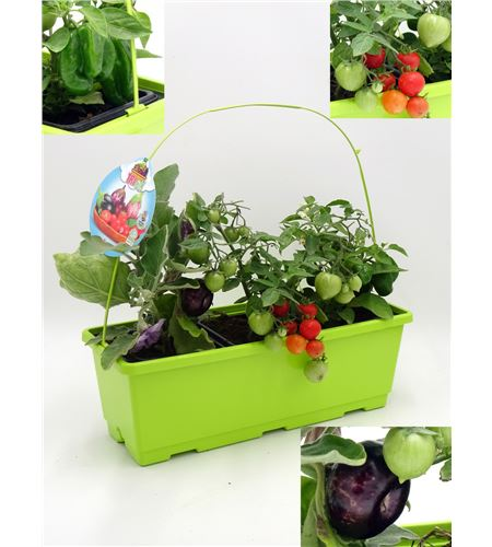 TriOh! Huerto Solanum lycopersicum · Capsicum annuum · Solanum melongena - 02045002 (0)
