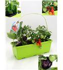 TriOh! Huerto Solanum lycopersicum · Capsicum annuum · Solanum melongena