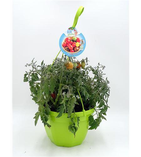 AirGarden Tomate I Solanum lycopersicum - 02044002 (0)