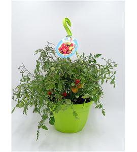 AirGarden Tomate II Solanum lycopersicum - 02044003 (0)