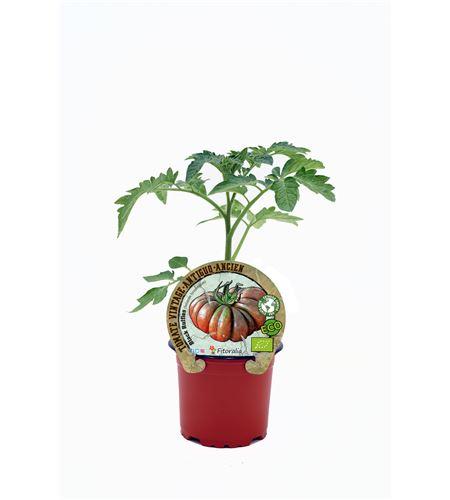 Tomate Black Ruffles M-10,5 Solanum lycopersicum - 02033004