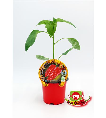 Picante Jay´s Red Scorpion Ghost M-10,5 Capsicum chinense - 02028022 (1)